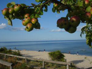 Äpple och strand